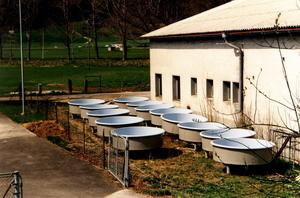 Bacs de pisciculture