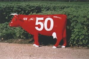 vache50